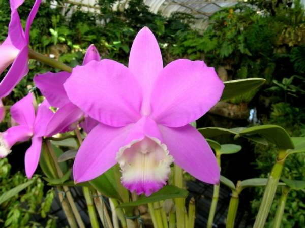 Paisagista / Como cuidar de orquídeas