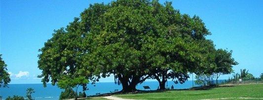 Jardinagem / Como realizar a poda de árvores