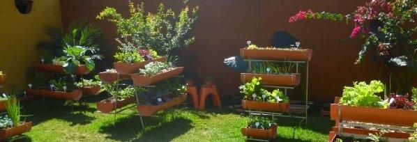 Jardinagem / Como ter uma horta em casa