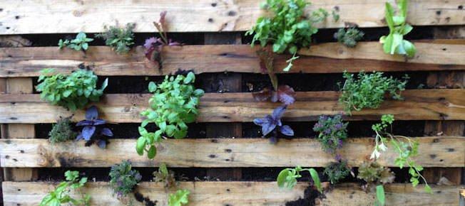 Decorador / Saiba como fazer jardim vertical usando paletes