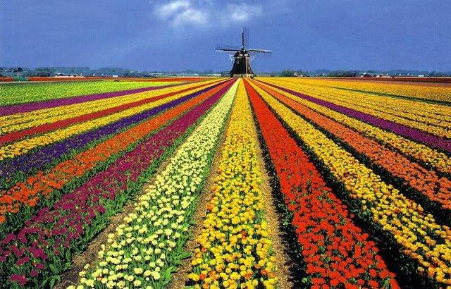 Jardinagem / As melhores flores para ter na primavera