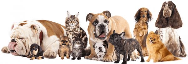 ideias-de-casas-e-camas-sustentaveis-para-caes-e-gatos