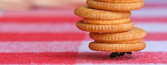 Dedetizador / Como acabar com as formigas de casa