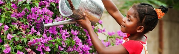 Jardinagem / 10 músicas para regar as plantas