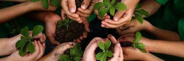 Jardinagem / Diferença entre adubo orgânico e inorgânico