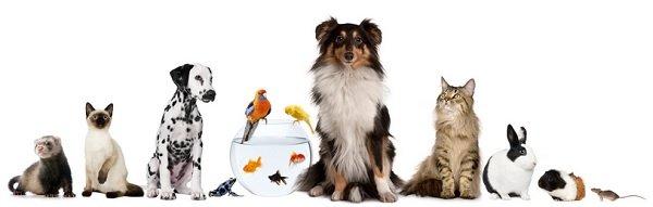Advogado / Como evitar reclamações de cães e gatos em condomínios?