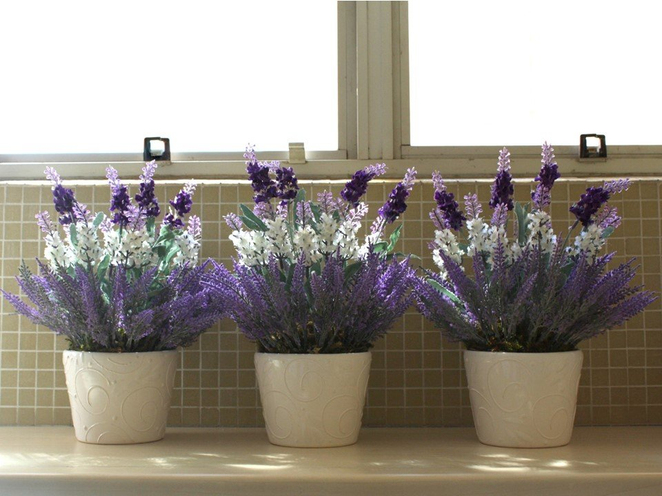 Veja quais as plantas funcionam como repelente natural for Lavanda coltivazione in vaso