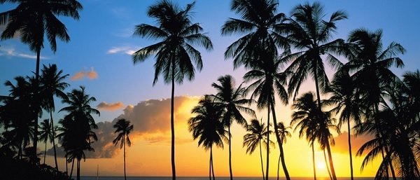 Jardinagem / Conheça os tipos de coqueiros para jardim