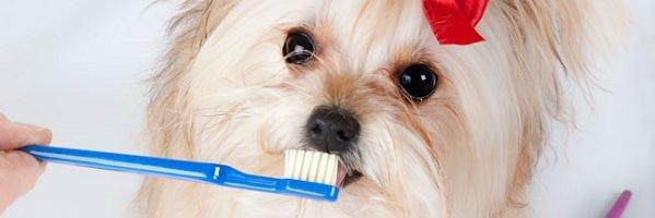 Adestrador de Cães / Como acabar com o mau hálito do cachorro