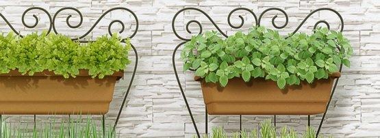 Jardinagem / Descubra o que plantar na sua horta em casa
